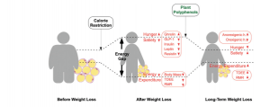 Modulation of the energy gap by diet restriction and polyphenol supplementation